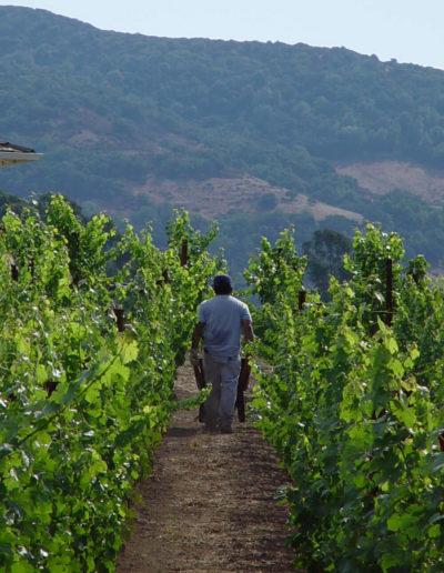 gallery-vineyard-worker-1